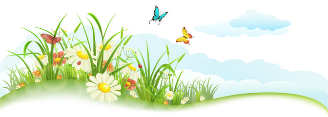 Fototapeta Do przedszkola Green spring summer banner with grass, flowers, butterfly and clouds