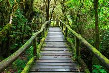 Beautiful Rain Forest At Ang Ka Nature Trail In Doi Inthanon Nat