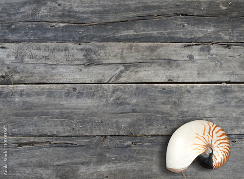 Fotografie, Obraz  nautilus pompilius shell on wooden background with copy space
