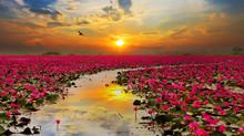 Sunshine Rising Lotus Flower I...