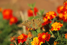 Butterfly On Bright, Colorful ...