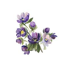 Watercolor illustration  flowers  pattern