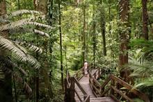 Daintree National Park, Rainfo...