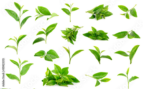 Tea leaves isolated on the white background