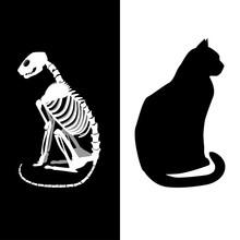 Schrodingers Cat Vector Illust...