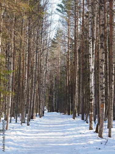 Tuinposter Berkbosje snowy road in the woods