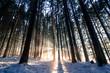 Sonnenstrahlen in winterlichem Wald, Weitwinkel