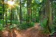 Saarland – Idyllischer Wald Mischwald mit Waldweg im Gegenlicht –Deutschland