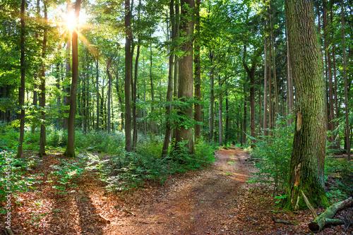 obraz PCV Saarland – Idyllischer Wald Mischwald mit Waldweg im Gegenlicht –Deutschland