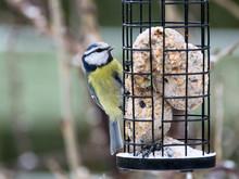 Blue Tit Sitting On Bird Feede...