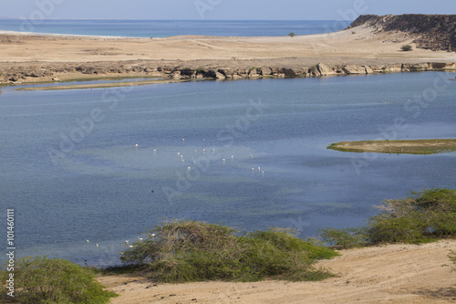 Foto op Aluminium Arctica Coastline of Indian Ocean in Oman.