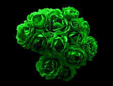 Surreal Dark Chrome Bush Of Green Rose Flowers Macro Isolated On Black