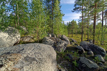 Big Boulders In The Northern Forest.