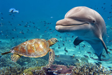 Fototapeta Delfin dolphin and turtle underwater on reef