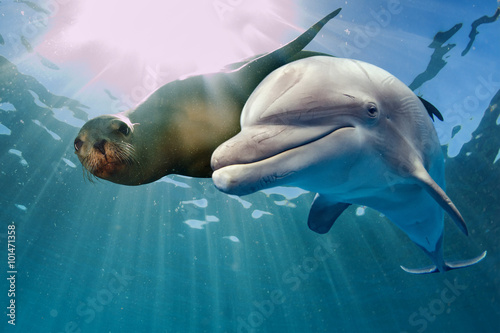 Papel de parede  dolphin and sea lion underwater