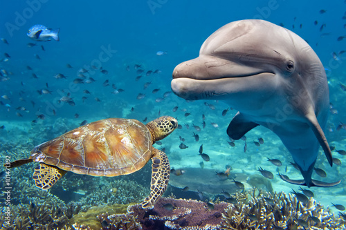 Fotografia, Obraz dolphin and turtle underwater on reef