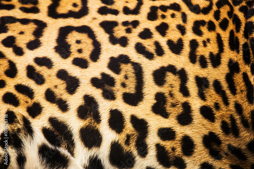 Spoed Foto op Canvas Luipaard Close up leopard spot pattern texture background