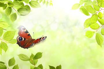 Fototapeta Motyle Schmetterling 204
