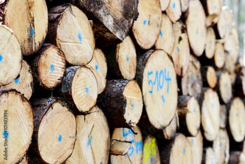 In de dag Brandhout textuur Stapel frisch gefällter Baumstämme im Wald