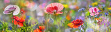 Fototapeta Kwiaty - summer meadow with red poppies