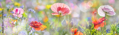 Staande foto Bleke violet summer meadow with red poppies