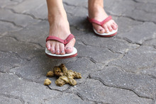 Woman Foot Step On A Dog Poop