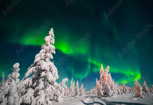 Photo sur Toile Aurore polaire Winter landscape with forest and polar light over the taiga