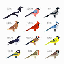 Vector Set Of Colorful Bird Ic...