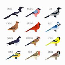 Vector Set Of Colorful Bird Icons. Cardinal, Magpie, Sparrow