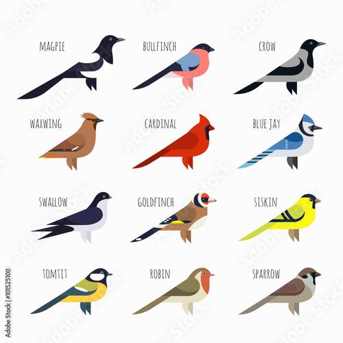 Obraz na płótnie Vector set of Colorful bird icons. Cardinal, magpie, sparrow