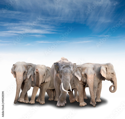 Photo  group of asia elephant