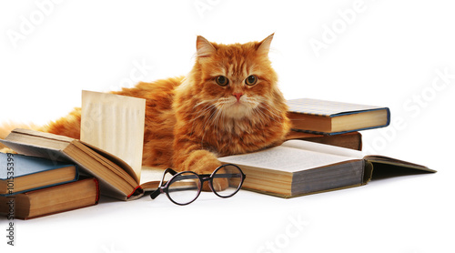 Red cat and books isolated on white Canvas Print