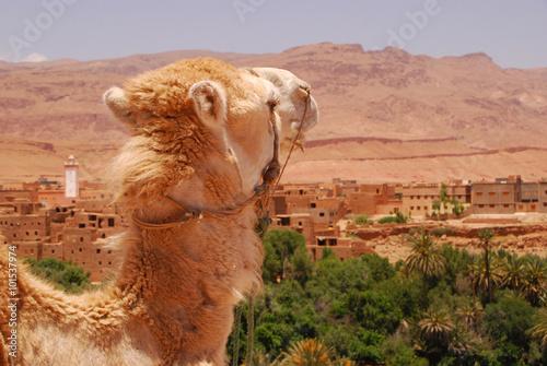 Marokko -   Auf der Straße der Kasbahs in der Nähe von Ouarazate