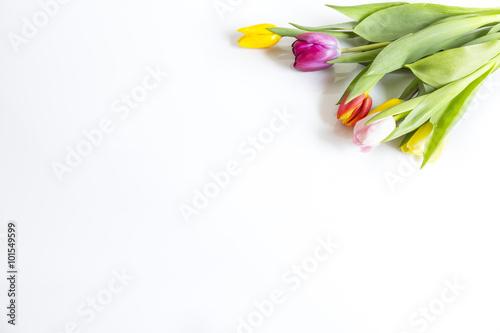 Fototapeta Tulipany na białym tle obraz