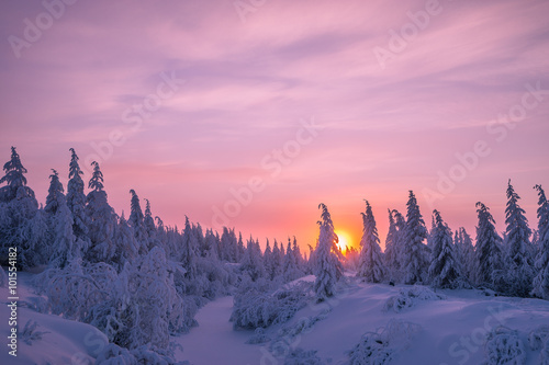 Poster Lichtroze Winter landscape with forest, clouds and sunset