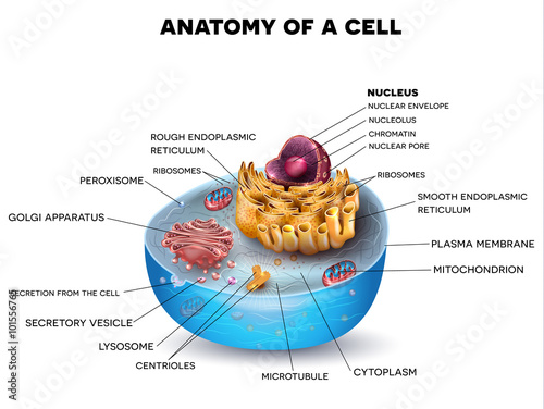 Fotografie, Tablou Cell structure