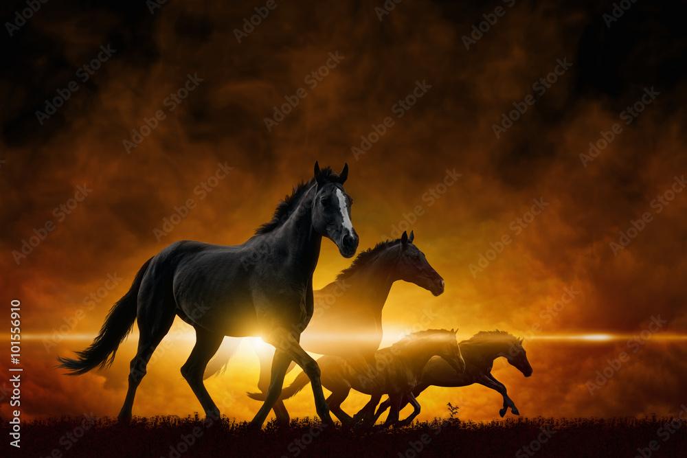 Fototapety, obrazy: Four running black horses