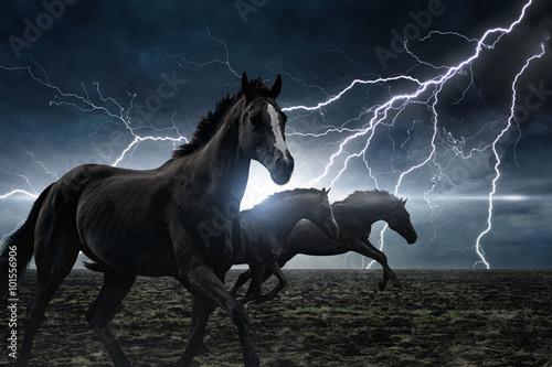 Spoed Foto op Canvas Paarden Running black horses