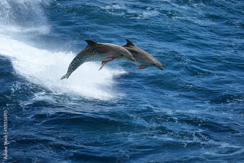 Foto op Aluminium Dolfijn Jumping dolphins in stormy sea