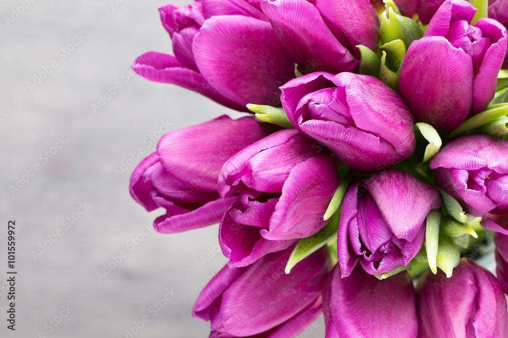 Fototapety, obrazy: Purple tulip bouquet on the gray background.