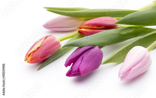 Foto  Tulips on the white background.