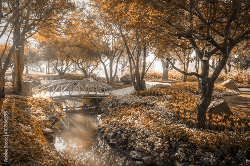 Fotomural wooden bridge in flower garden on morning sun light sepia color