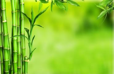 Panel Szklany Podświetlane Bambus Bamboo.