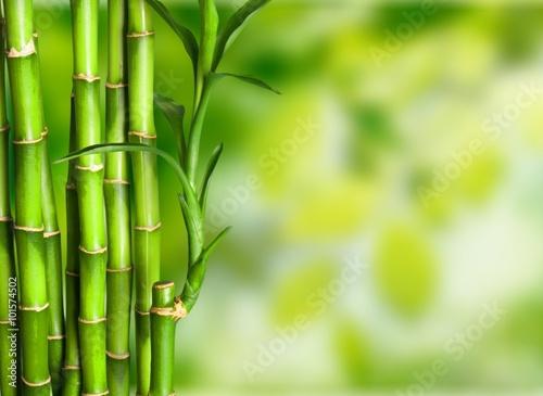 Foto op Plexiglas Bamboe Bamboo.