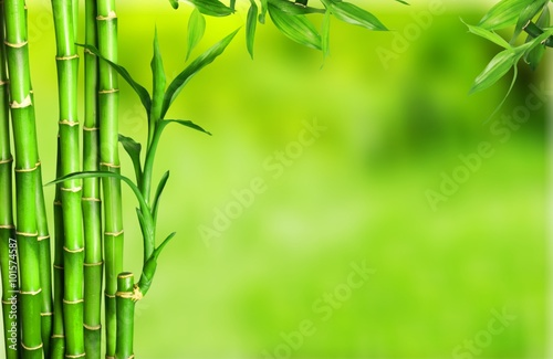 Photo Stands Bamboo Bamboo.