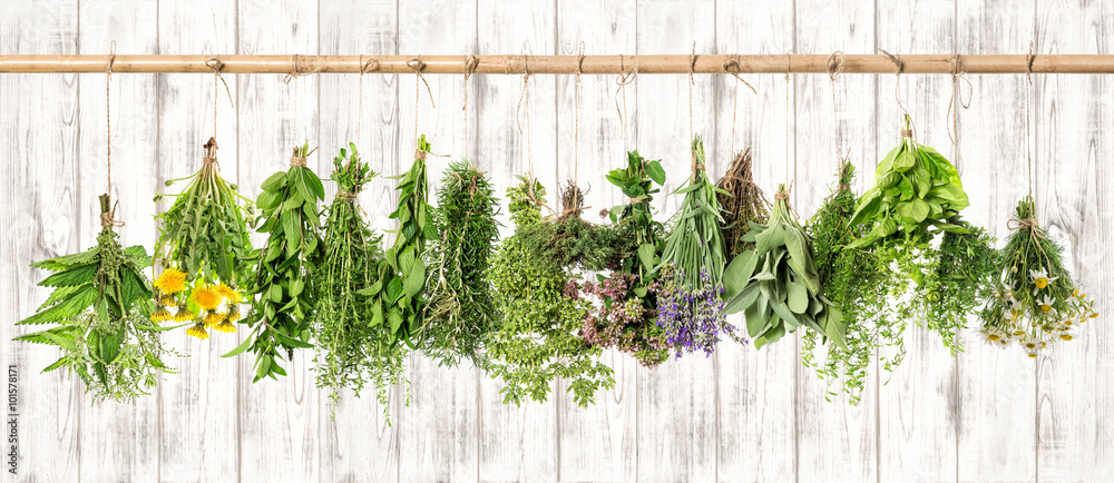 Fototapety, obrazy: Medicinal herbs. Herbal apothecary. Lavender, dandelion, nettle