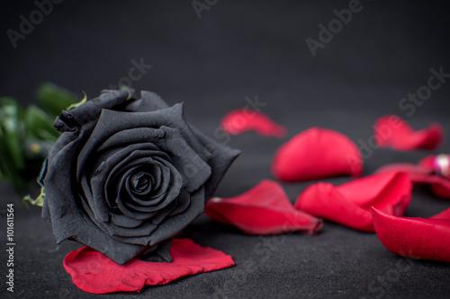 Photo Rosa Negra sobre pétalos rojos