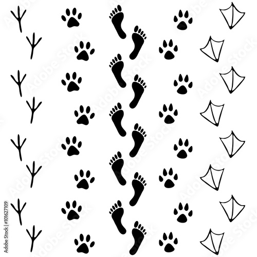 Vector set of human and animal, bird footprints icon. Collection of ...
