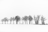 The trees in winter - 101635199