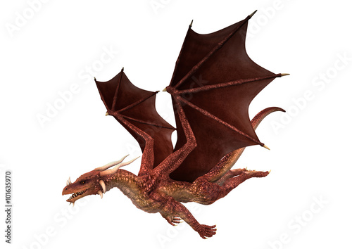 Fotografie, Tablou  Red Dragon On White